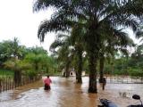 Hutan Gundul Undang Bencana…