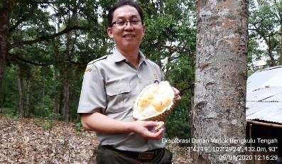 """Potensi SDG: Durian Bengkulu, Rasanya """"Susah Dilupakan"""""""